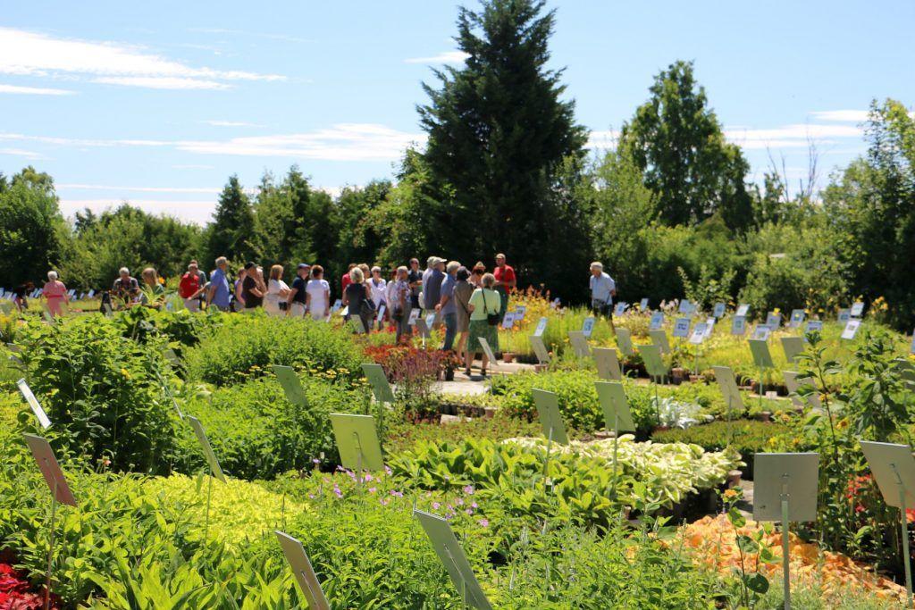 Sommerfest in der Gärtnerei Klenart-Stauden