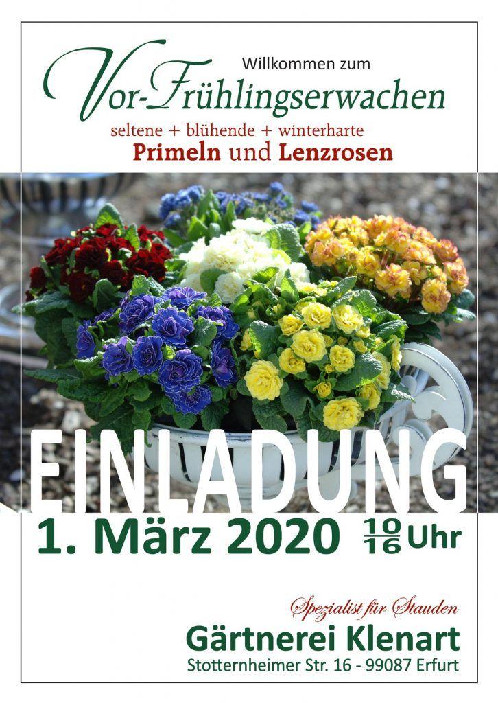 Vor-Frühlingserwachen 2020 Gärtnerei Klenart-Stauden Erfurt