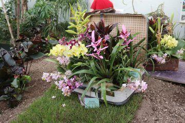 Orchideen-Arrangement