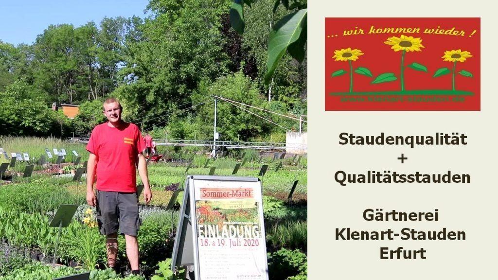 Gartentipps Juli 2020 - Staudenqualität