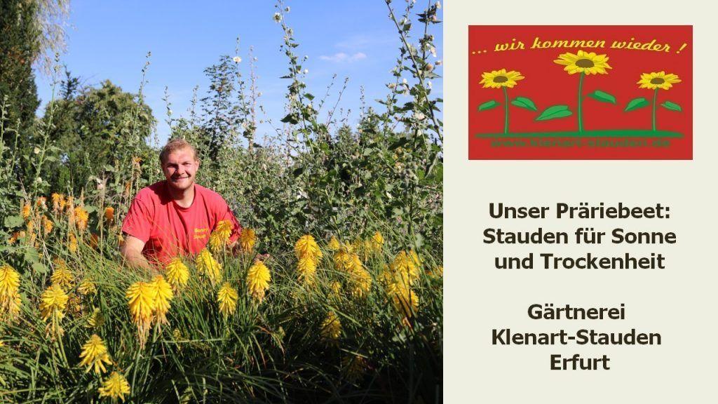 Gartentipps August 2020 - Stauden für Sonne und Trockenheit