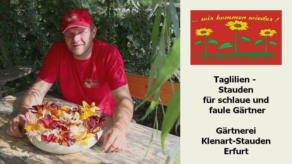 Taglilien - Stauden für schlaue und faule Gärtner