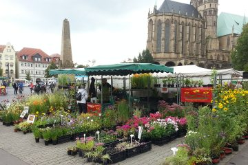Messe, Markt, Pflanzenbörse 01