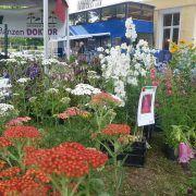 Messen, Märkte, Pflanzenbörsen